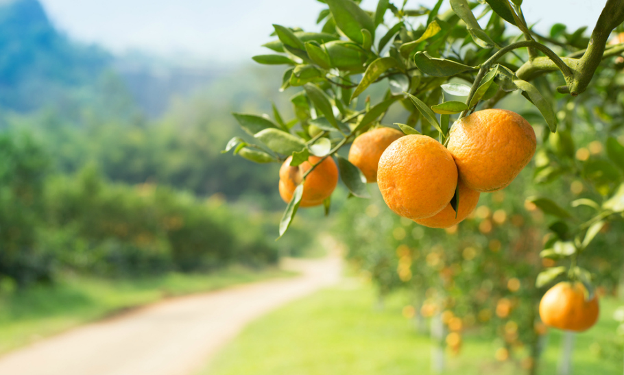 Is Kakadu Plum The New Orange?
