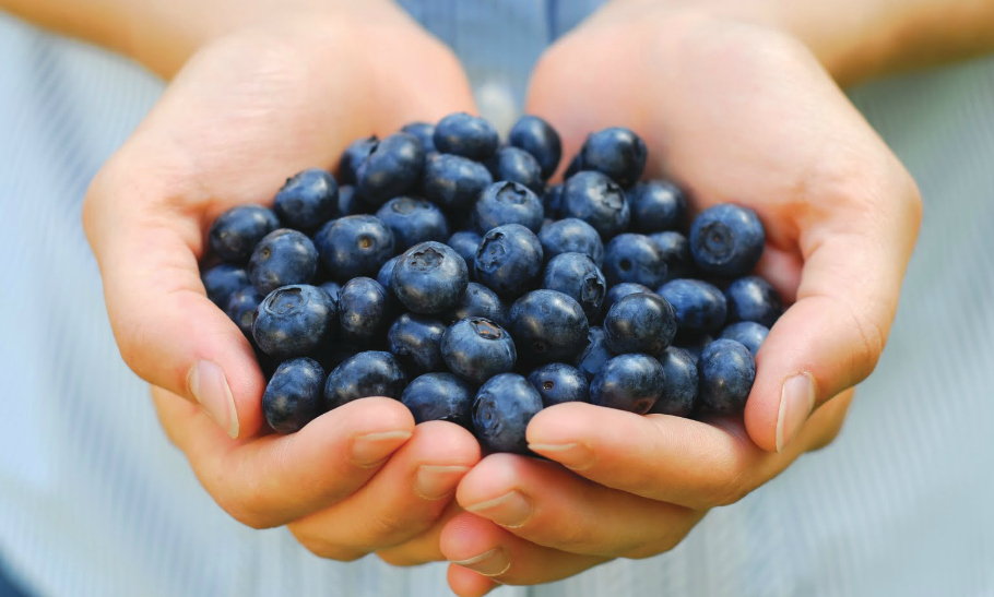 10 Surprising Facts You Didn't Know About Blueberries!