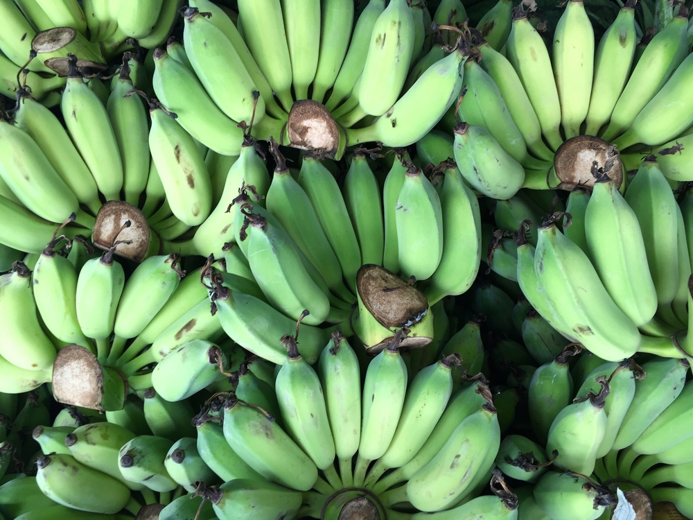 Why you should eat green banana starch
