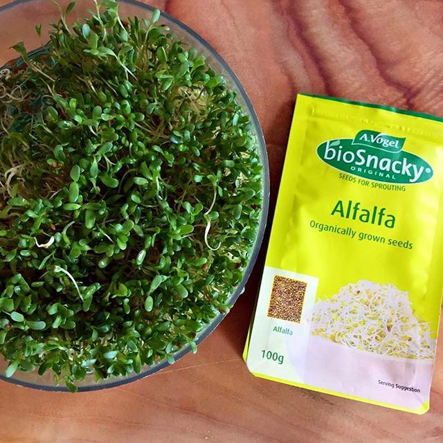 How To Sprout Your Own Alfalfa Seeds – GoodnessMe Box